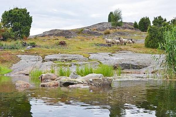 Visit Blekinge | Långasjönäs naturreservat, Översikt