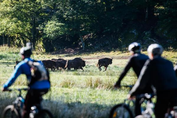 Cyclists on a guided safari