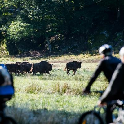 Cycling safari in the wilderness at Eriksberg